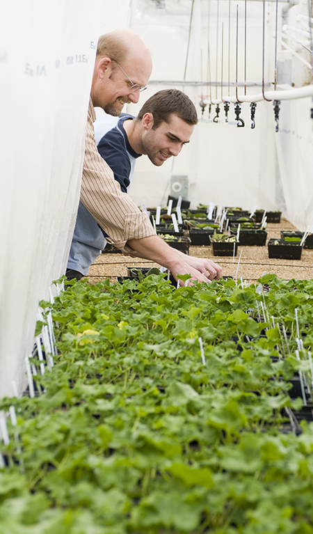 Mark H. Brand, Professor of Horticulture instructs a student in a procedure at the Floriculture Greenhouse.