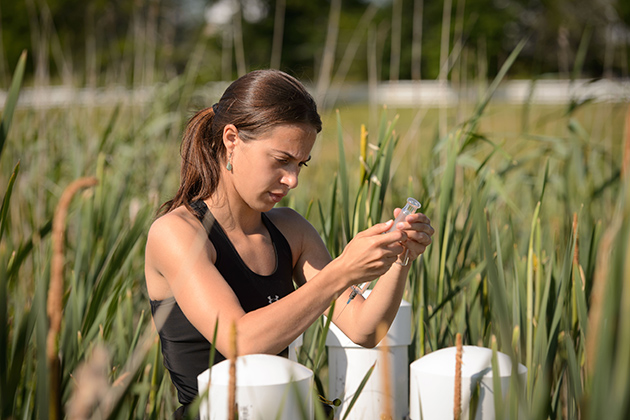Emily McInerney (CAHNR '15) takes air samples from a wetland, as part of her research on the role of wetlands as a producer of greenhouse gases.